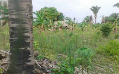 Destruido laboratorio artesanal y erradicadas más de 9 mil matas de coca en Arauquita.