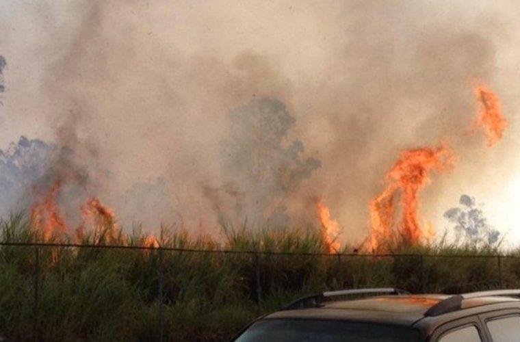 Una hectárea de vegetación en el Piquetierra fue consumida por las llamas.  Le prendieron fuego para cazar chiguires, dice Bomberos.