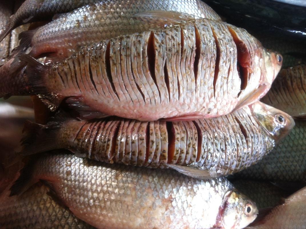 Durante mayo y junio no se podrá comercializar pescado en el departamento de Arauca