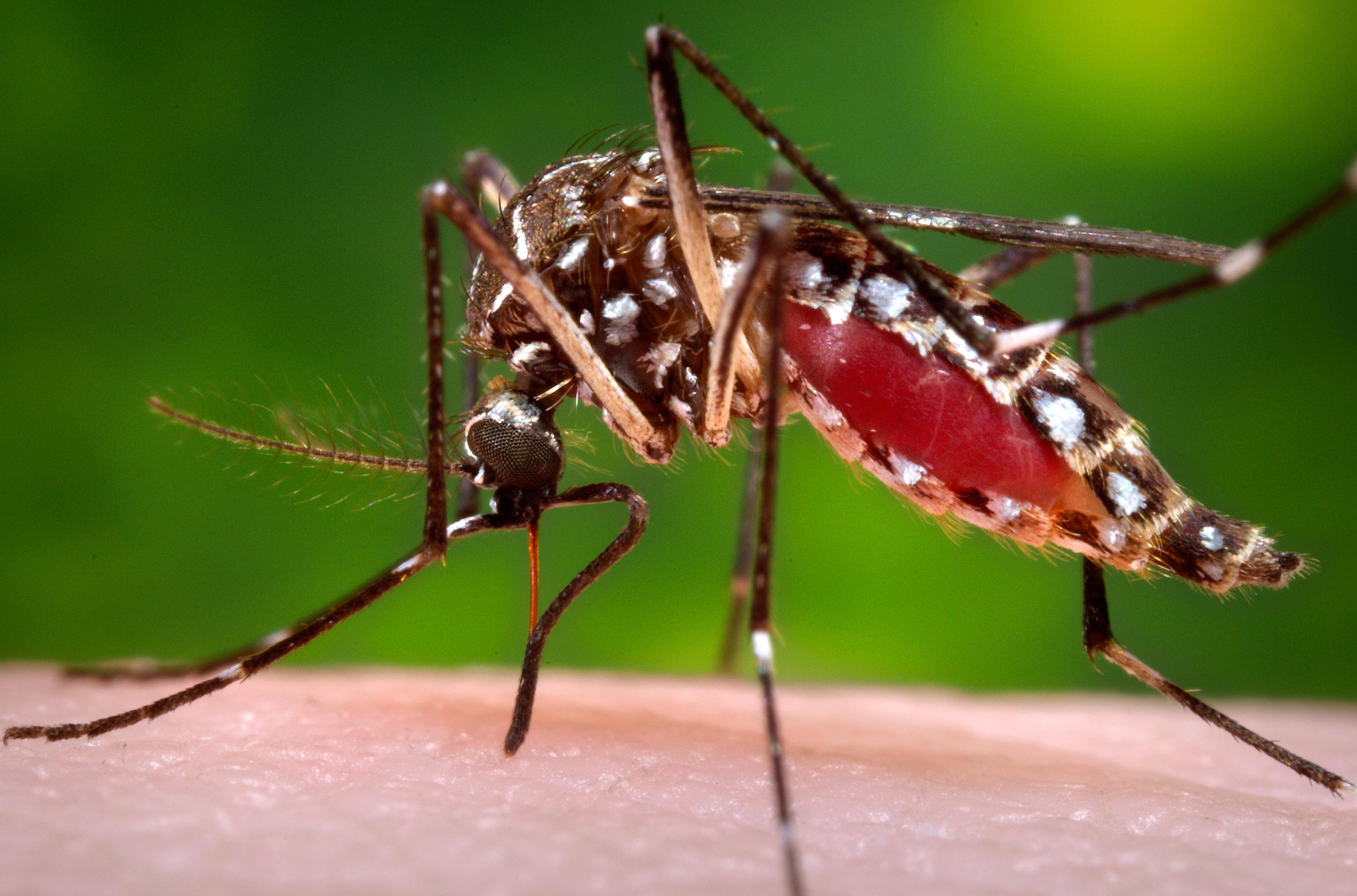 452 personas han sido contagiadas con el virus del Zika en el departamento