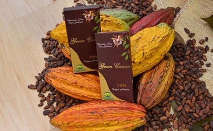 Arauca puede convertirse en primera zona cacaotera del país