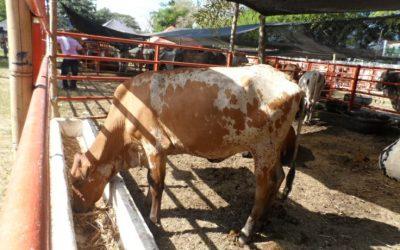 Se salvó la Feria Agropecuaria de Arauca