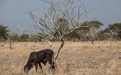 Hasta abril se prolongara temporada de sequía en el departamento