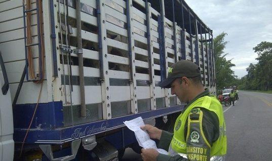 Habilitado el transporte de ganado desde Tame