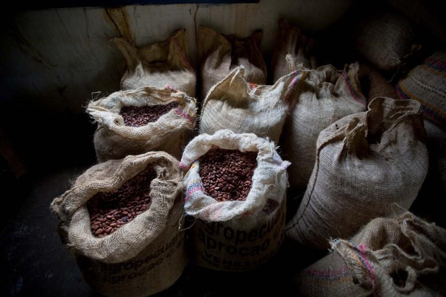 En crisis sector agropecuario en el departamento de Arauca