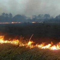 Incendios forestales han afectado zonas verdes en Arauca, Tame y Arauquita