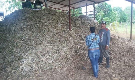 """Productores de panela recibirán 359 millones de pesos del programa """"Colombia Transforma"""""""