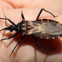 Entregan certificación de territorio libre del Chagas