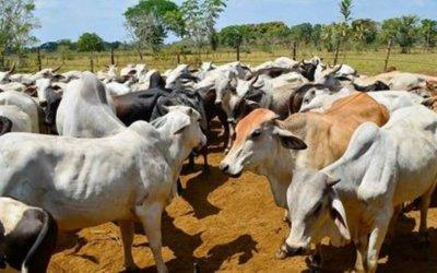 Crisis que vive el sector ganadero será abordada por la Asamblea