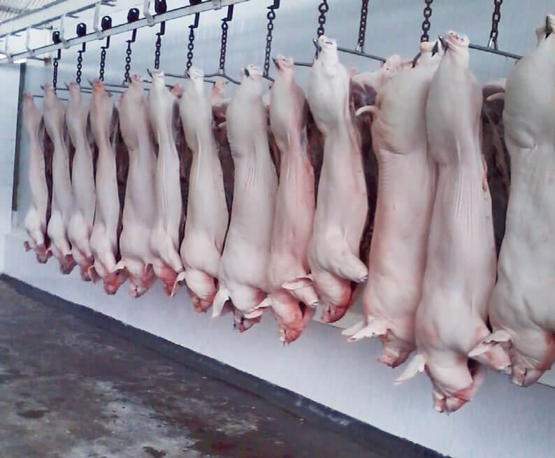 Porcicultores del departamento impulsaran la construcción de una planta privada de sacrificio
