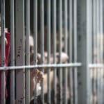 A la cárcel fue enviado sujeto que extorsionaba transportadores