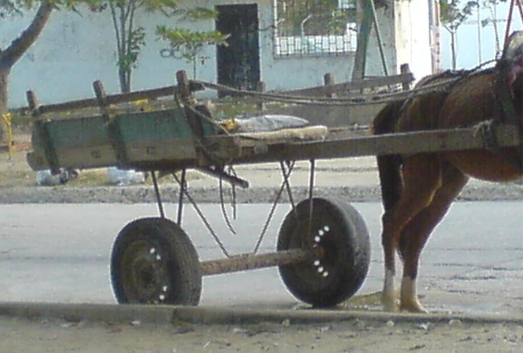 Carromuleros se quedaron sin dinero para sustituir vehículos de tracción animal