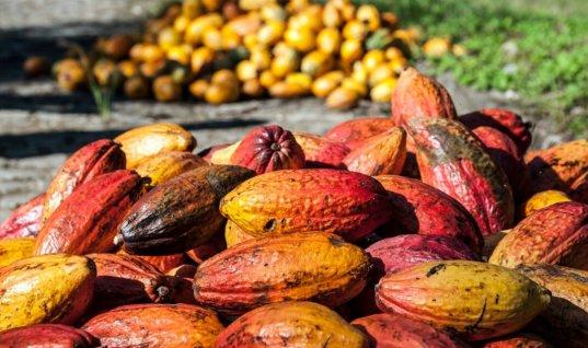 Salón del Chocolate será inaugurado en las festividades de Arauquita del 10 al 15 de octubre.