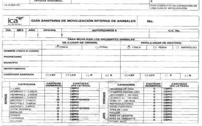 ICA ha expedido 300 libretas de movilización equina en Arauca.