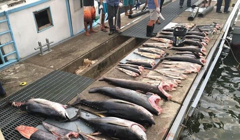 Para mover pescado fuera del Departamento las personas deberán tramitar permiso en la AUNAP. Documento no tiene ningún costo.