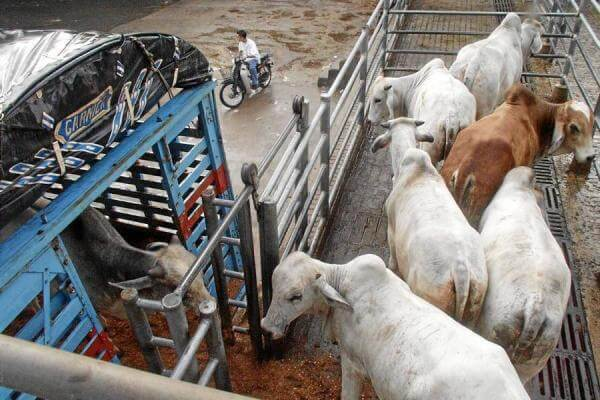 Temor entre ganaderos por nuevas reglas para mover ganado de Arauca.