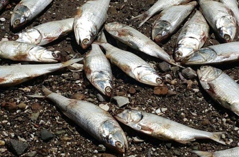 CORPORINOQUIA atendió queja en la vereda El Miedo por muerte de peces. El verano comienza a hacer estragos.