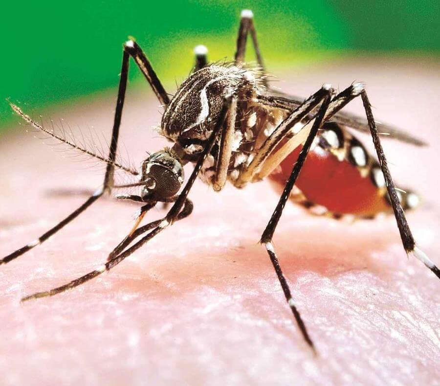 Van 1.456 casos de dengue en el Departamento. Arauca lidera estadística con 431 casos, seguido de Saravena con 404.