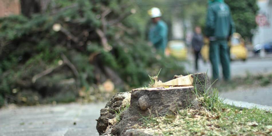 Grave queja en Fortul. Comunidad molesta por tala de árboles para construir cicloruta. Le exigen a Corporinoquia tomar medidas.