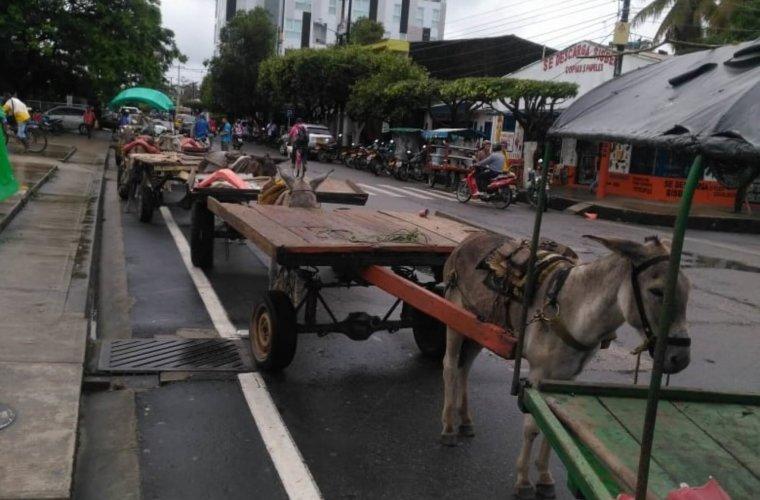 Carromuleros llevan ocho años y no han logrado la sustitución de sus vehículos. Critican al actual Alcalde y lo definen como negligente.