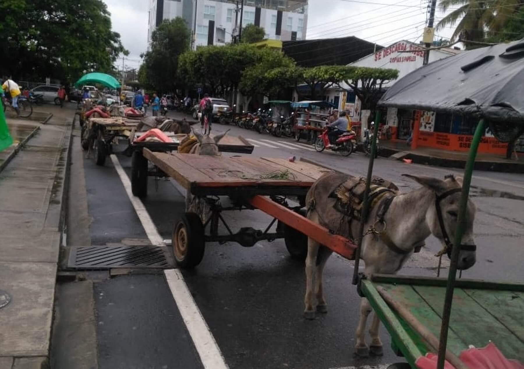 Serias diferencias entre los carromuleros en Arauca. Un sector pide realizar nuevo censo porque algunos ya tienen otros oficios.