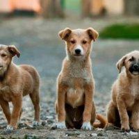 Inaugurado Centro de Bienestar Animal en la capital araucana. Capacidad instalada es para 60 animales y cuenta con veterinario las 24 horas del día.