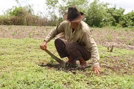 Campesinos de la vereda de Barrancones y aledañas continúan altamente preocupados por la falta de ayudas humanitarias.
