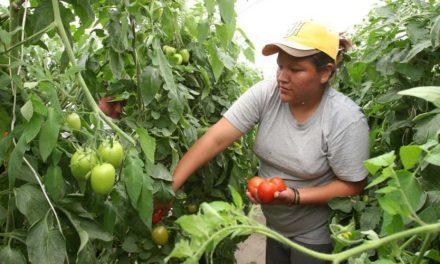 Convocatorias para las mujeres rurales en el departamento de Arauca